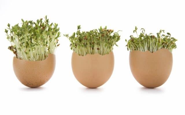 Zelf kiemgroente kweken