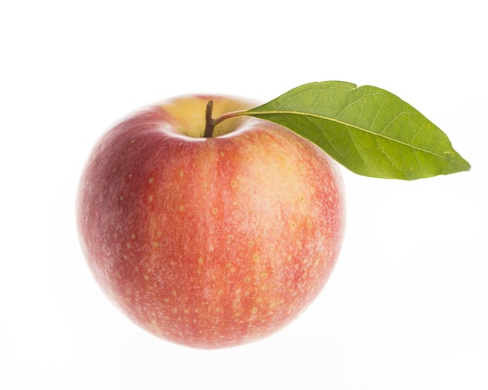 elstar appel voor appelmoes