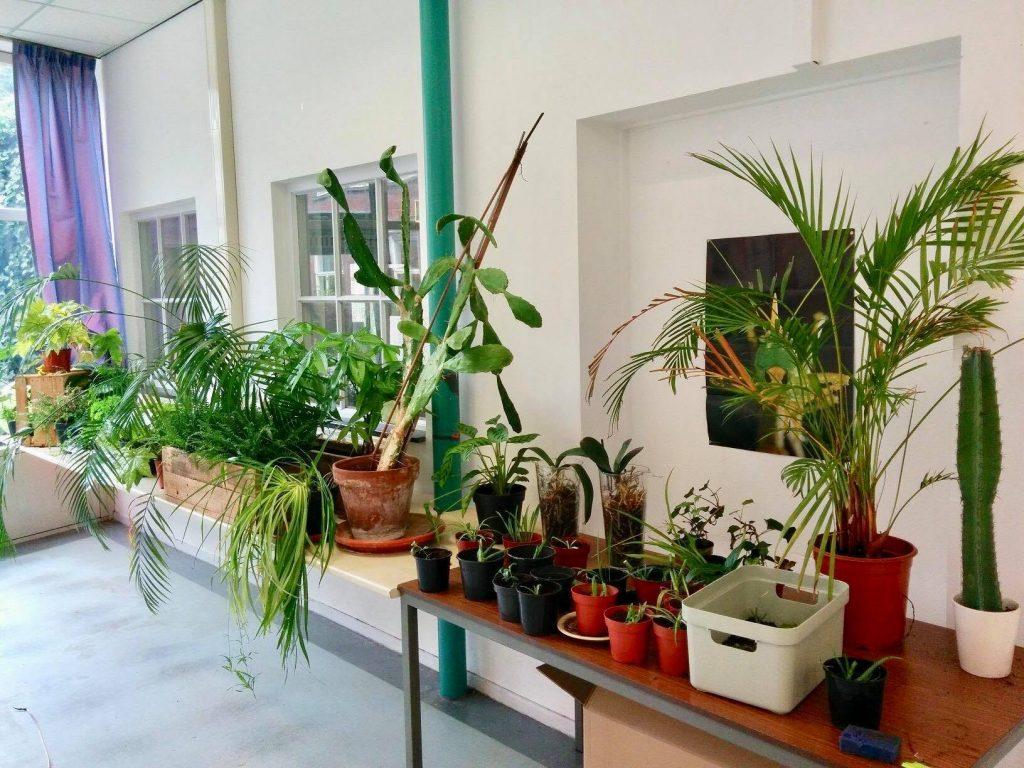plantenasiel