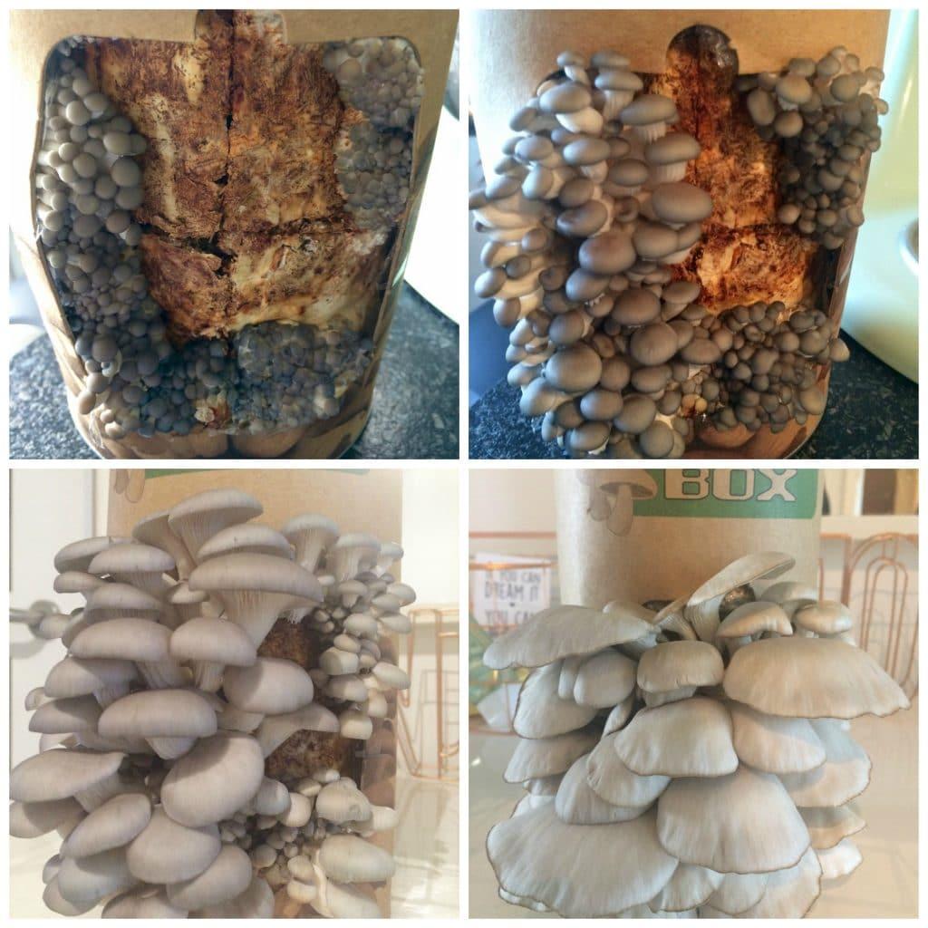 Fungi-box - de oogst