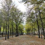 Een koninklijke wandeling door Den Haag en de jaren heen…
