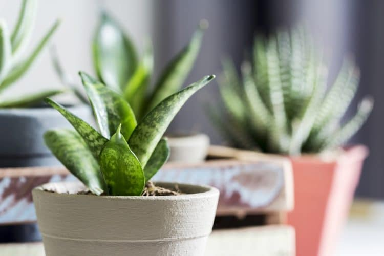 Planten, natuurlijke luchtzuiveraars!