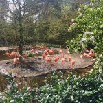 Zomers dagje uit: Vogelpark Avifauna