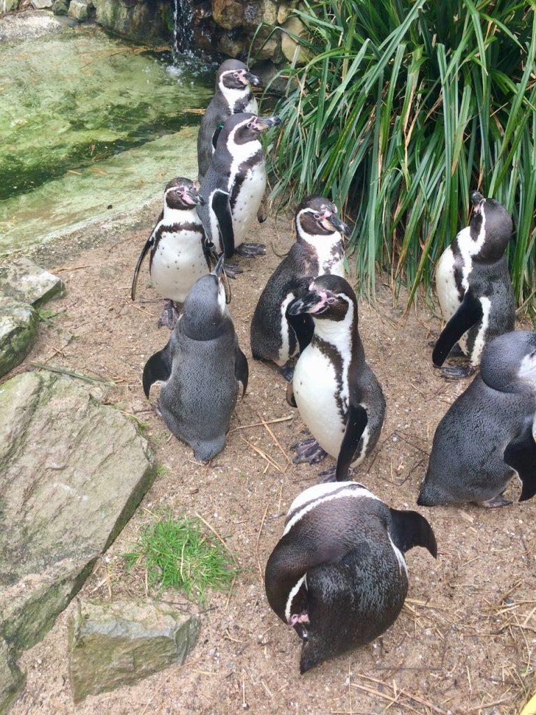 Vogelpark Avifauna