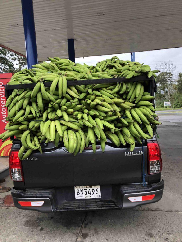 Reis door Panama - bananen
