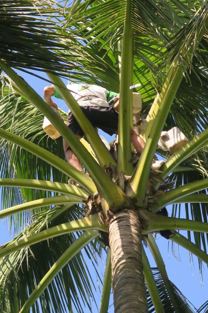 Specerijentour Java- palmsuiker