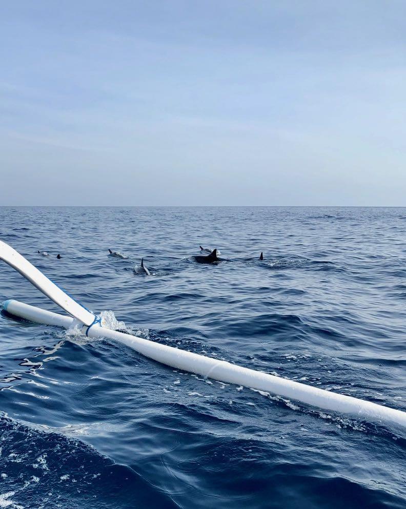 Rondreis Java en Bali - dolfijnen