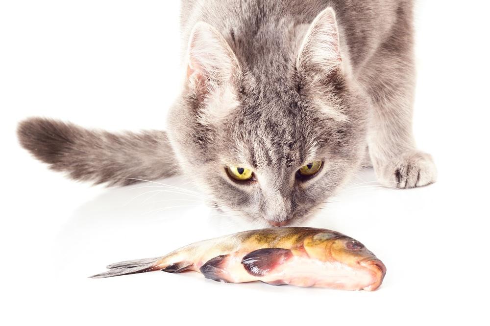 vis voor de poes