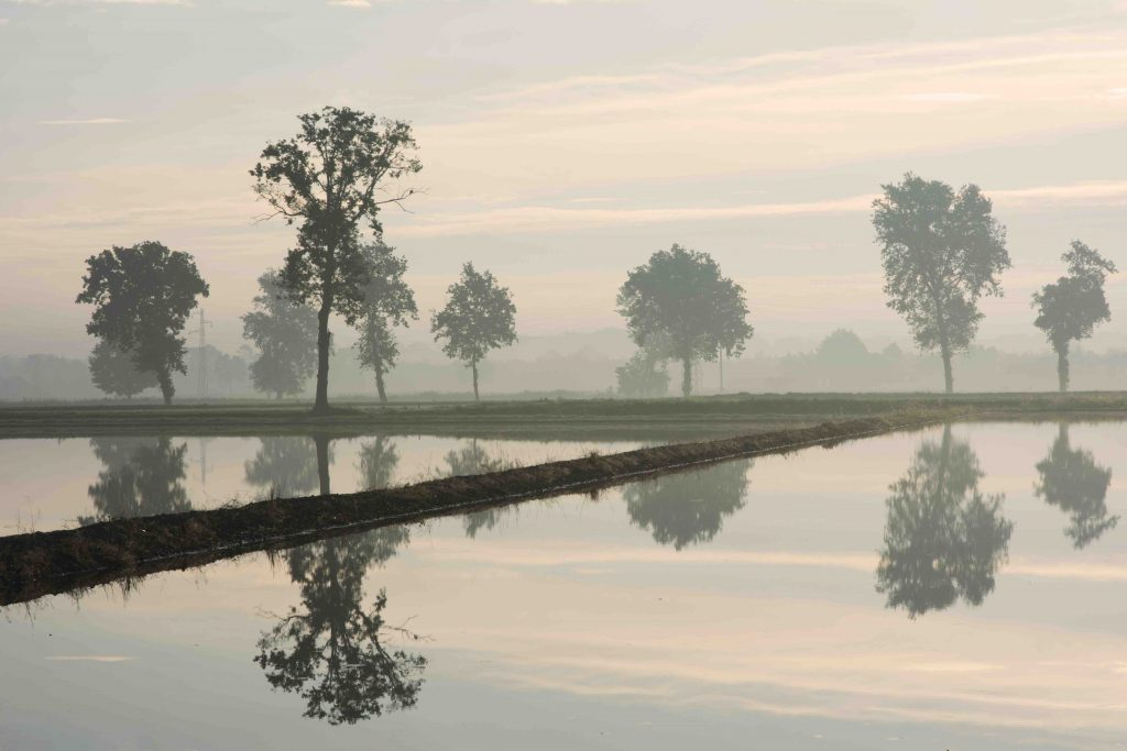 rijstvelden Pavia