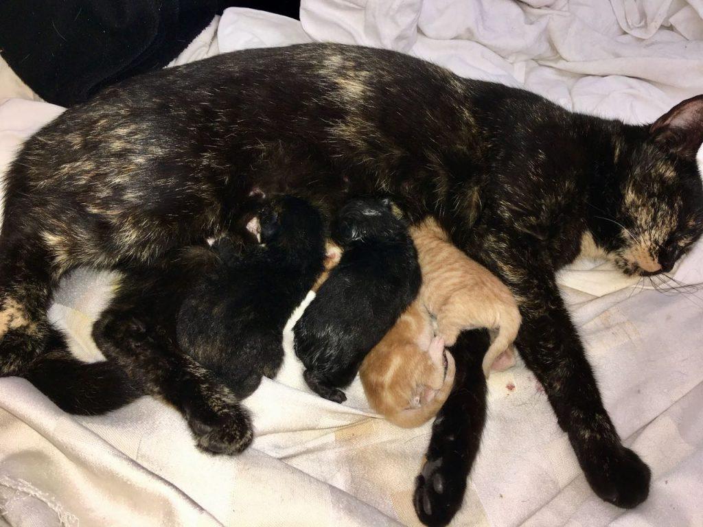 uit de moestuin: kittens