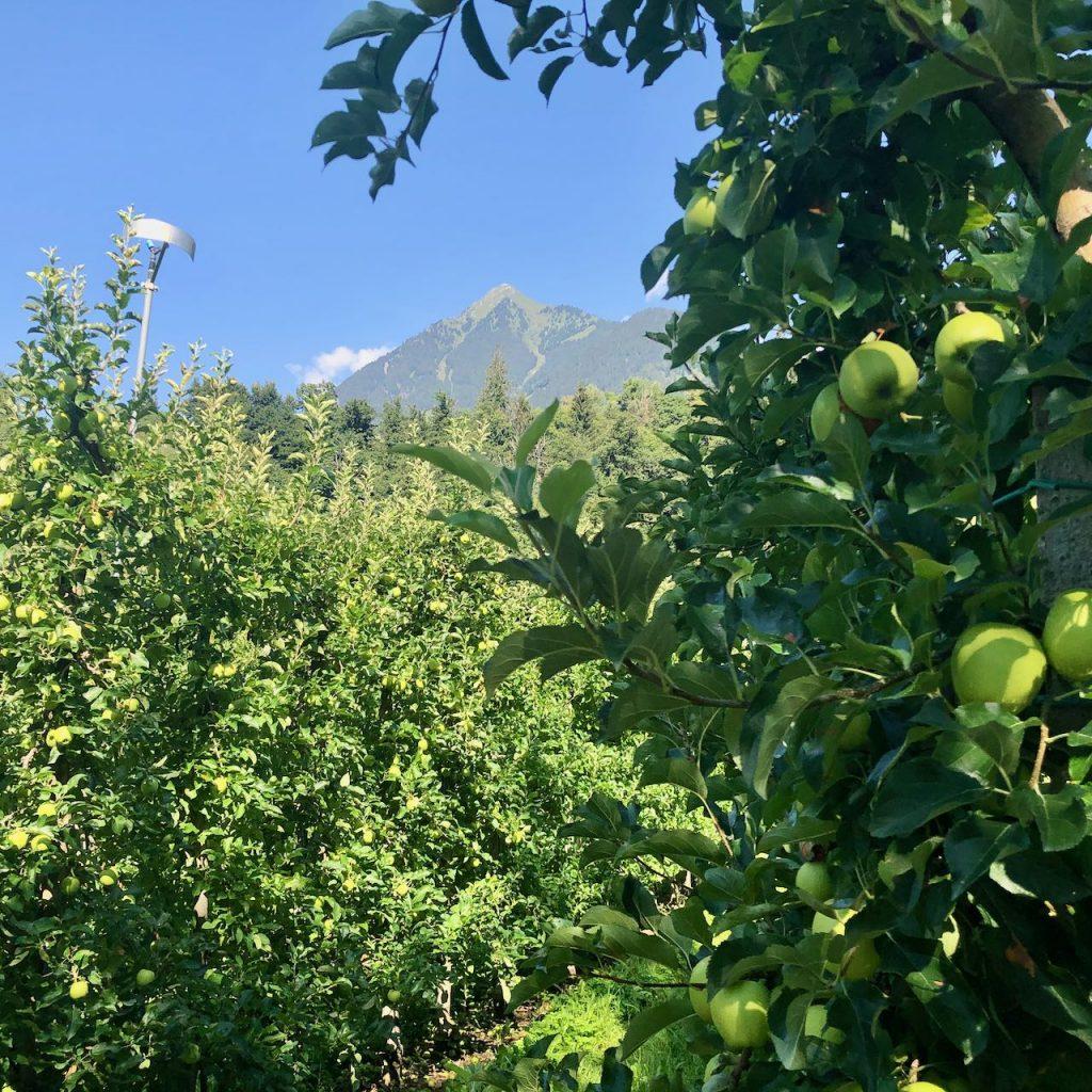 marlene appels