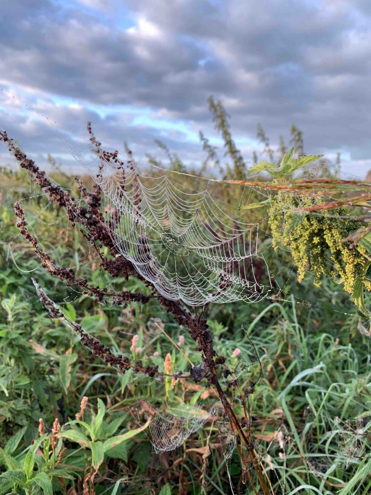 uit de moestuin - spinnenweb