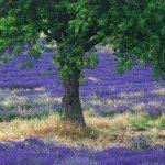 Op vakantie naar de Provence