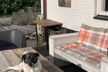 Uit de moestuin - hond pien in de zon