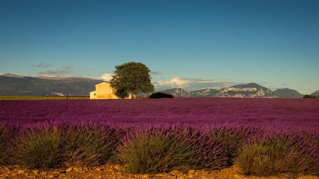 vakantie naar de provence
