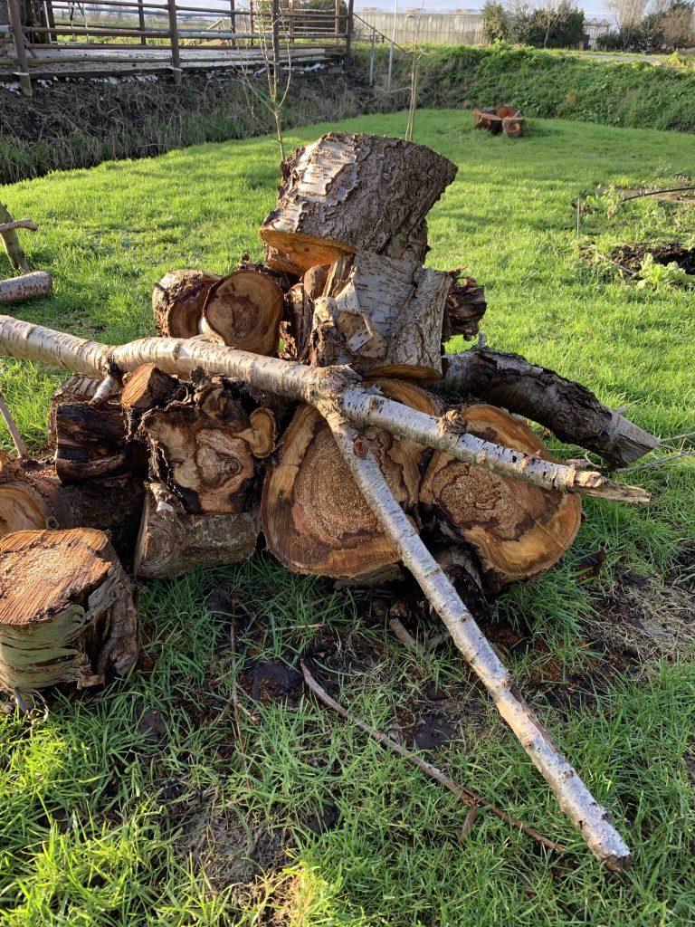 Uit de moestuin - omgehakte kersenboom