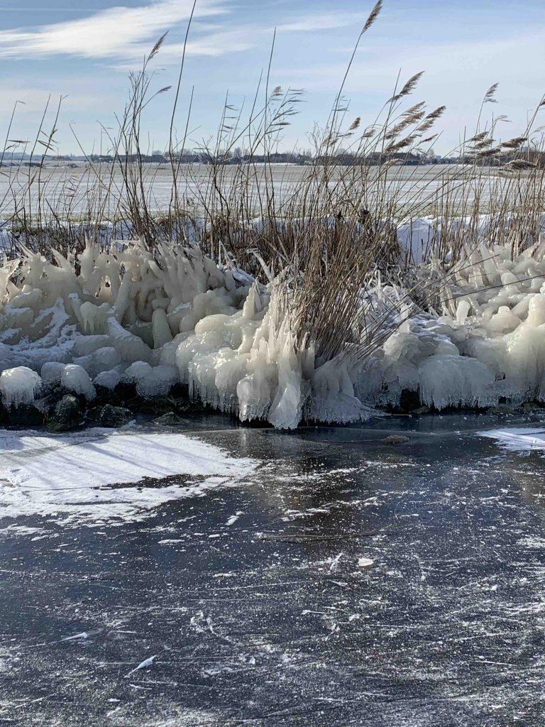 Uit de moestuin: winterse plaatjes