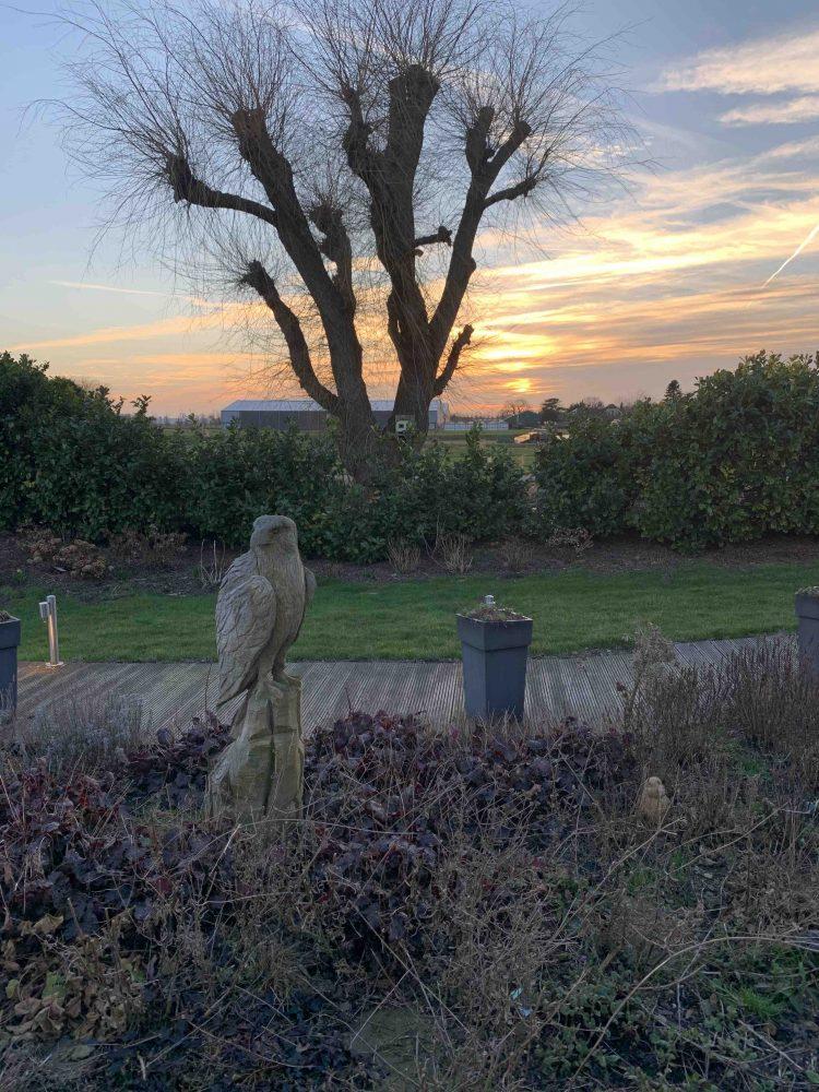 Uit de moestuin - zonsopkomst