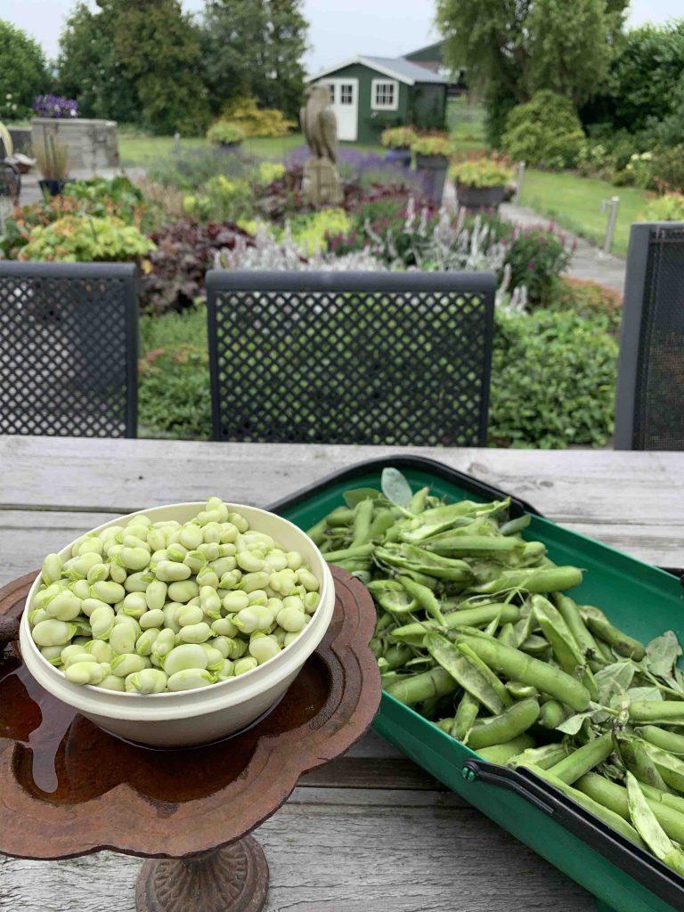 tuinbonen uit de moestuin